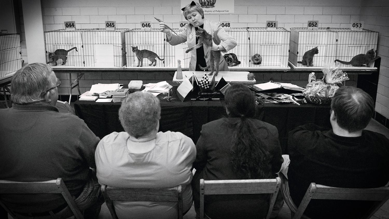 Cat Show Judge / Indianapolis