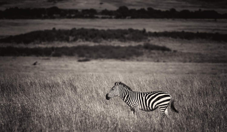 MaasaiMara-184-EditBW 18.jpg