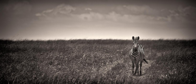 MaasaiMara-1429-Edit-Edit bw 18in.jpg
