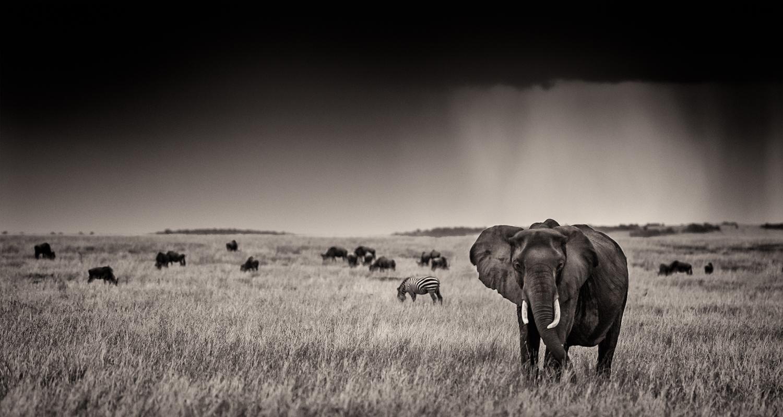 MaasaiMara-1065-Edit2.jpg