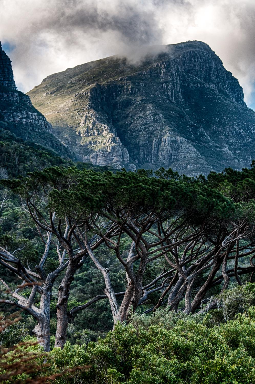 Kirstenbosch-36_HDR_1.jpg
