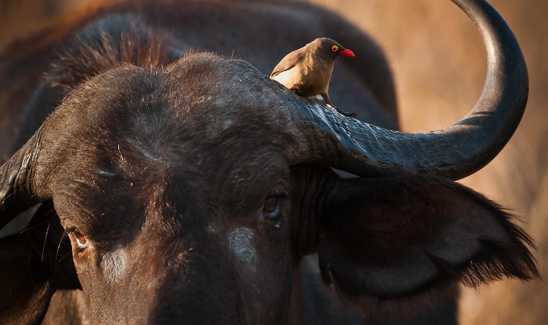 Kirkmans3-Bird & Beast.jpg