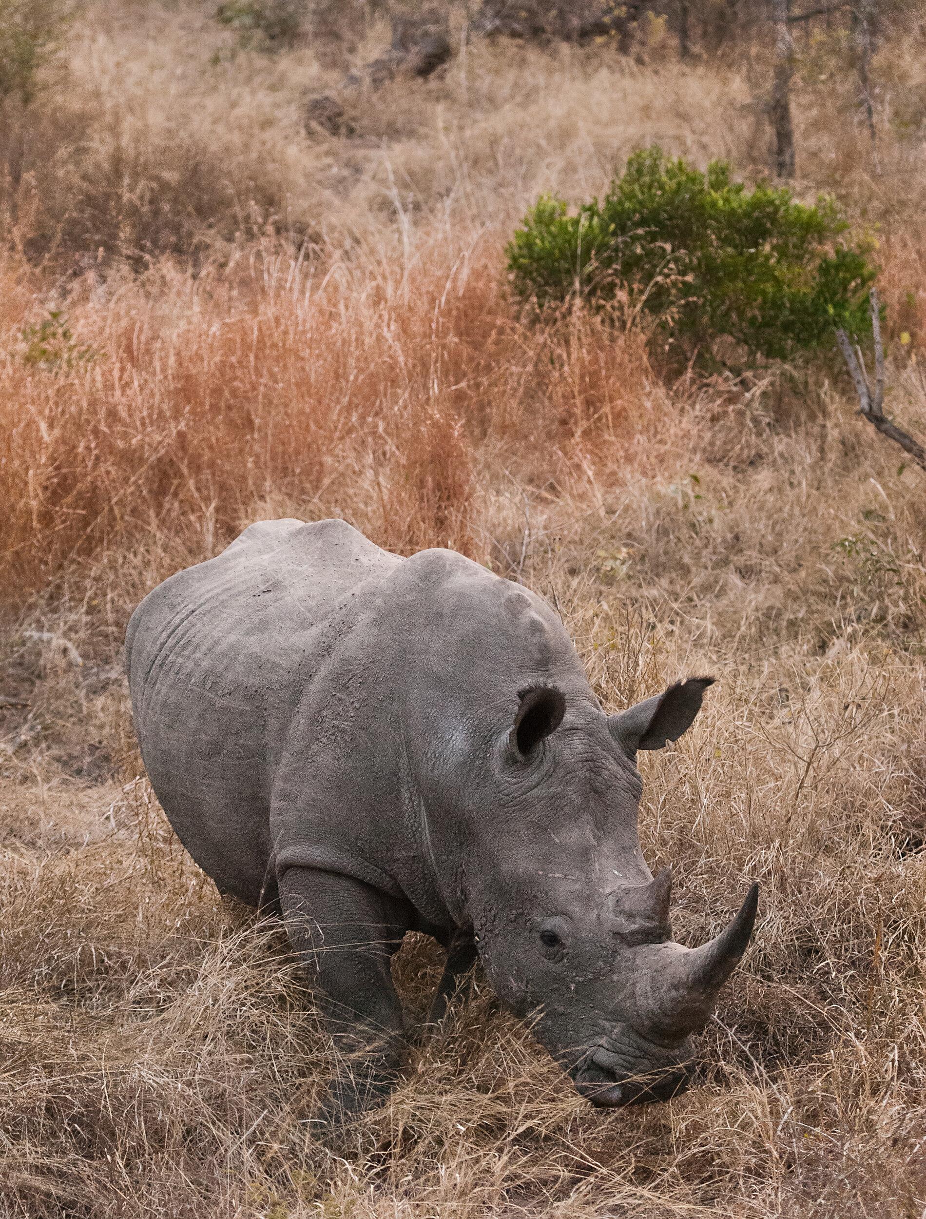 Kirkmans1_RhinoBush_ebs-Squarespace2500.jpg