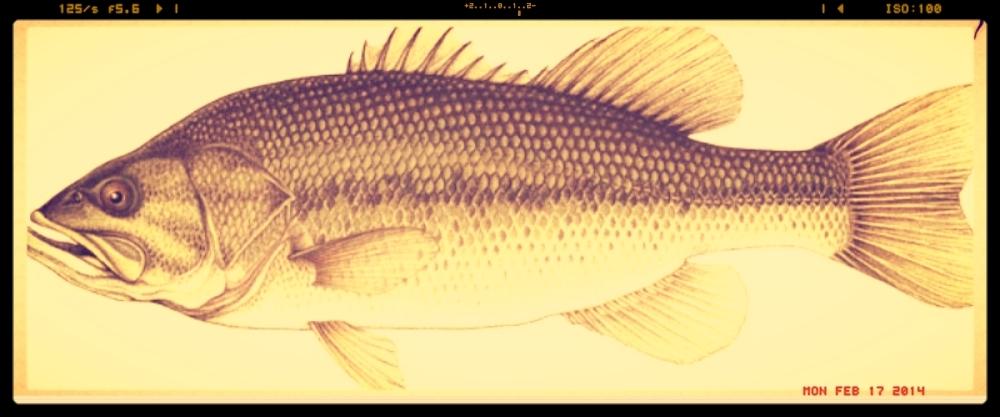 bass for fb.jpg