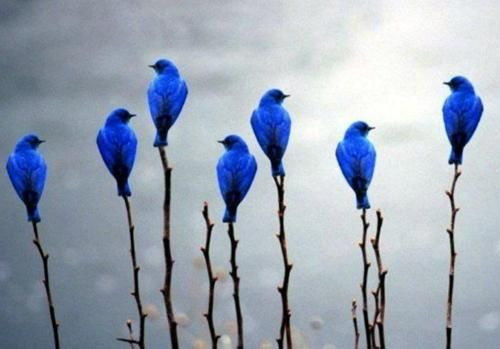 bluebirds group.jpg