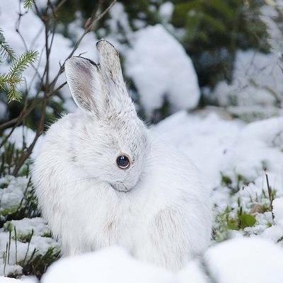 Bunny from aquieterstorm