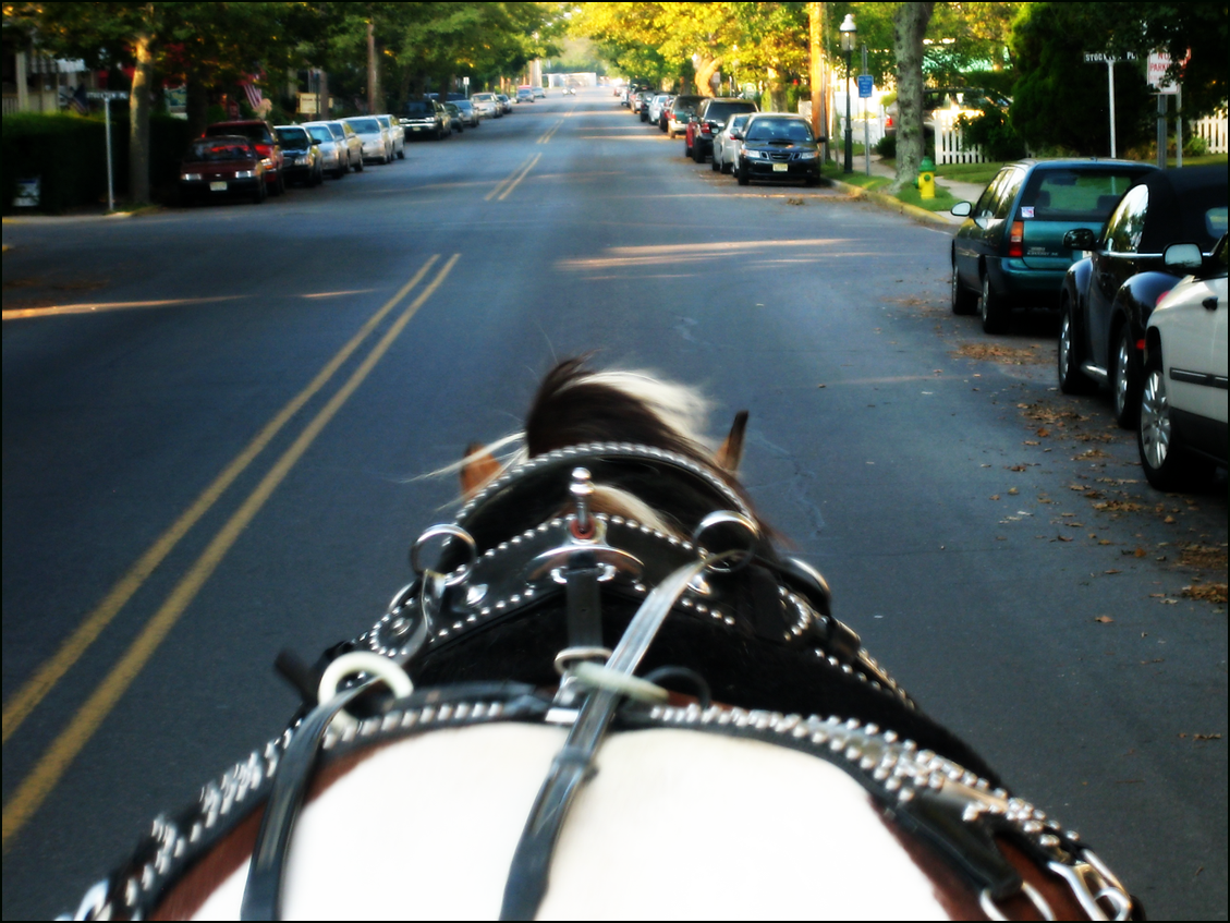 horse carriage tour cape may sm IMG_3838.png