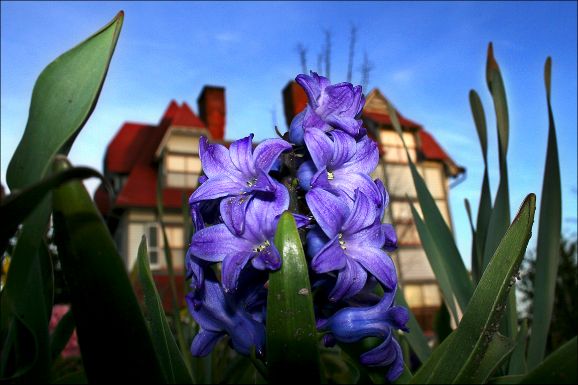 These flowers were photographed in front of the amazingEmlen Physick Estate, the beautiful historic landmark and Cape May icon that is a star attraction for tourists, art lovers, and architect aficionados alike. The flower bloom is one of the tell tale signs that Spring has arrived in Cape May. And the Mother's Day weekend is a popular time to be here.