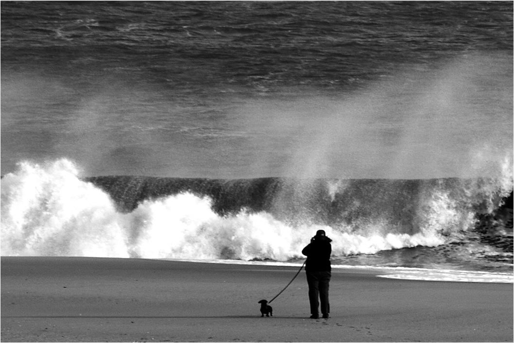 """""""Doodles Loves the Beach""""  I love this shot. A pet and his owner taking in the best of what Cape May has to offer."""