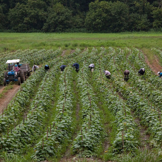 Migrant workers in Virginia, USA (image by Laura Elizabeth Pohl/Bread for the World via  Flickr )