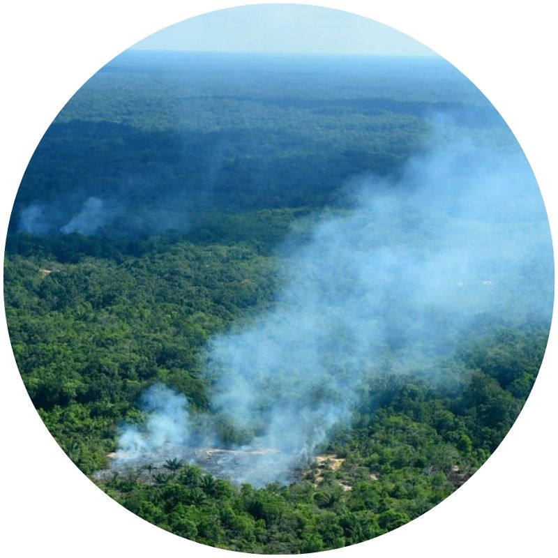 Light grey smoke rising from the Amazonian forest (Credit: Chico Batata/picture-alliance/dpa/AP Images)