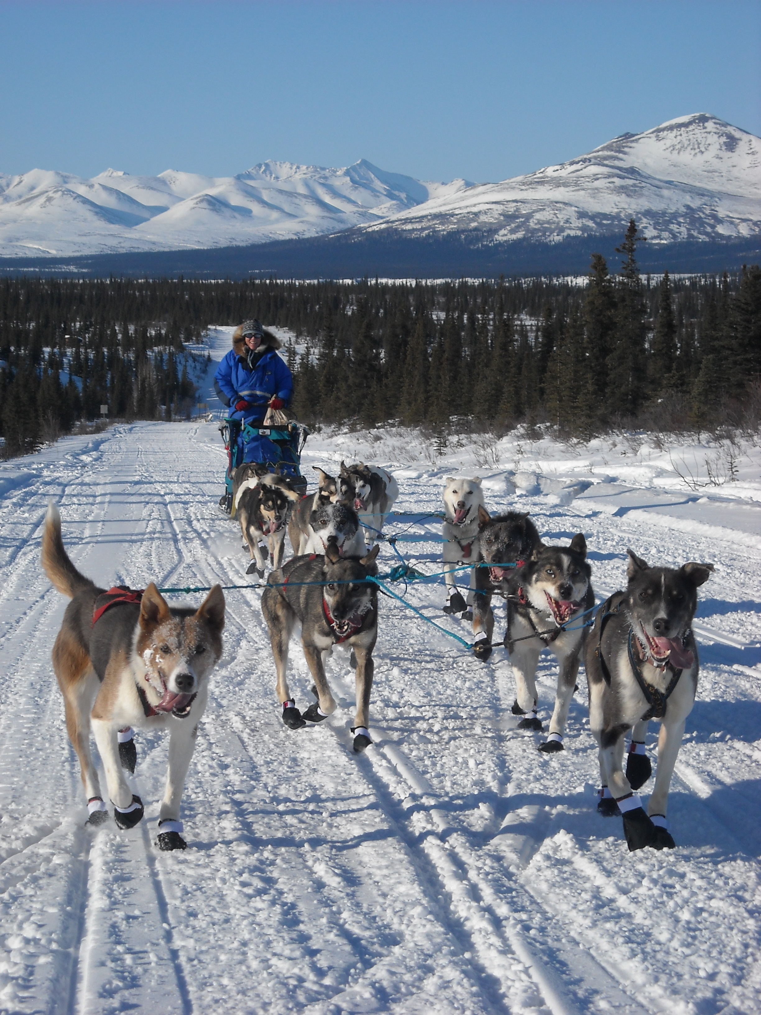 Debbie Moderow on the trail with her dogs outside of Denali Park, Alaska.
