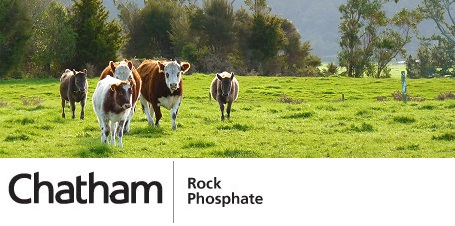 cow_paddockweb.jpg