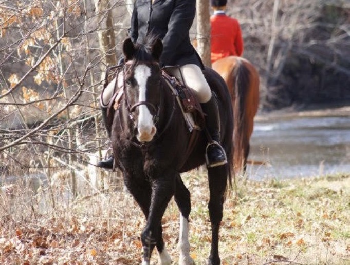 Partial Horse Leases — SaddleBack Equestrian