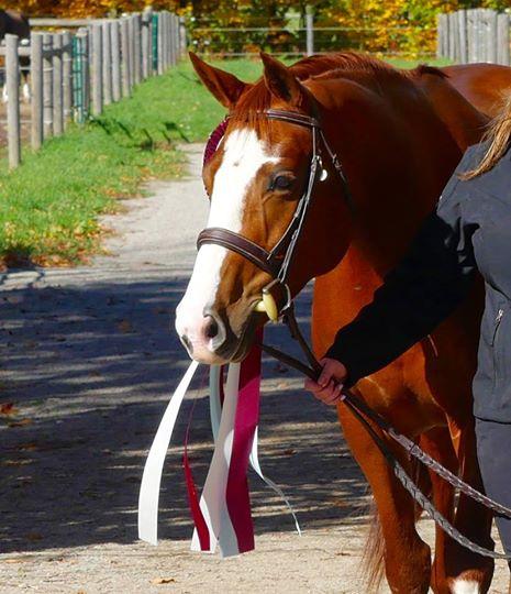 SALES — SaddleBack Equestrian