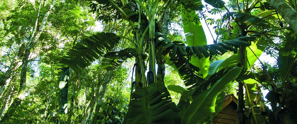 rainforest2.jpg