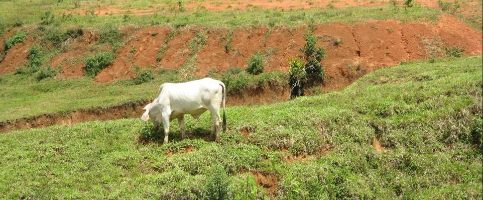 cow-eating.jpg