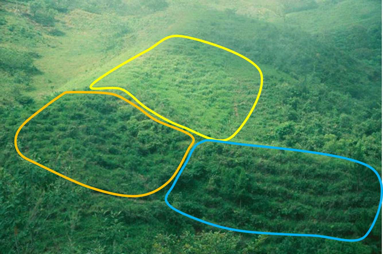 Four plots of Ensayo 94 (blue), and 15 each of Ensayo 96 (orange) and 98 (yellow). Some of these are out of sight on the slope at left.
