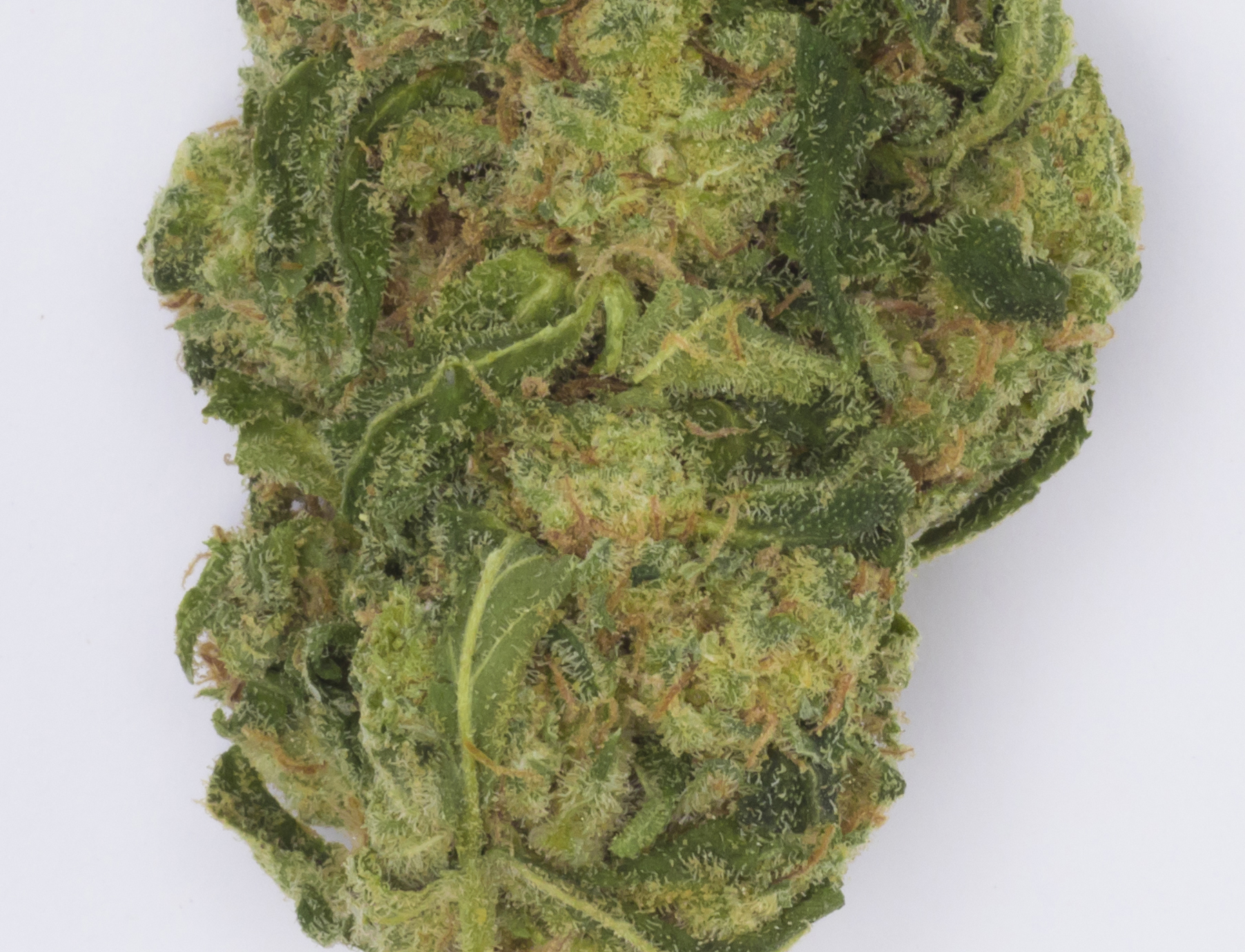 Cannabis002101A2064 copy.jpg