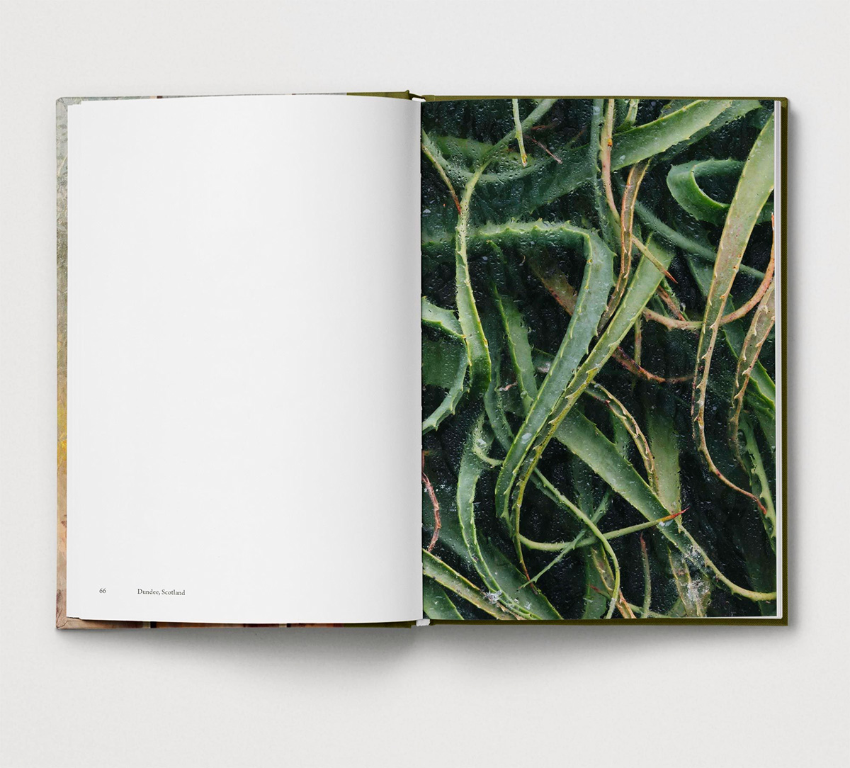 Botanical_spreads_8.jpg