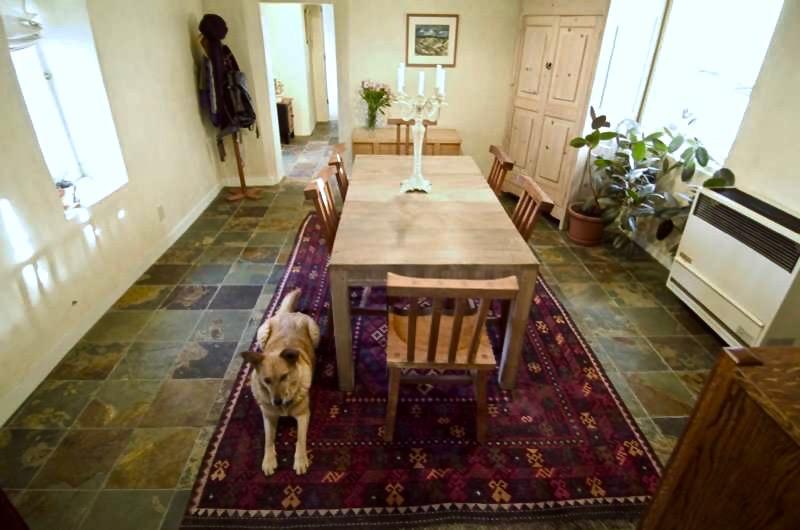 moxie-in-living-room.jpg