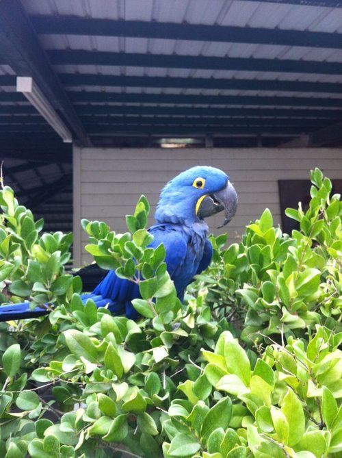 Lulu the barn bird
