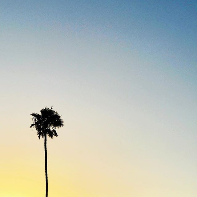 Perfect palette palm tree skies tonight... #alohafriday