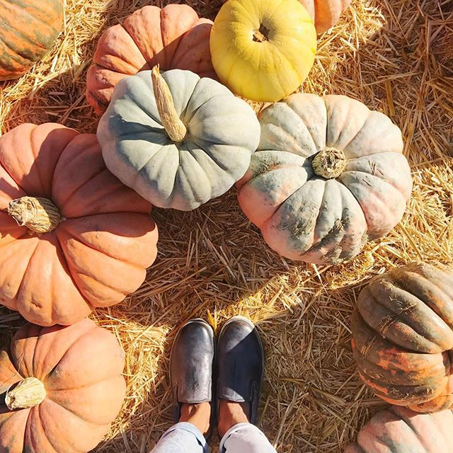 We love all things pretty...especially when it's pretty pumpkins. Always a good time with @bedstu.