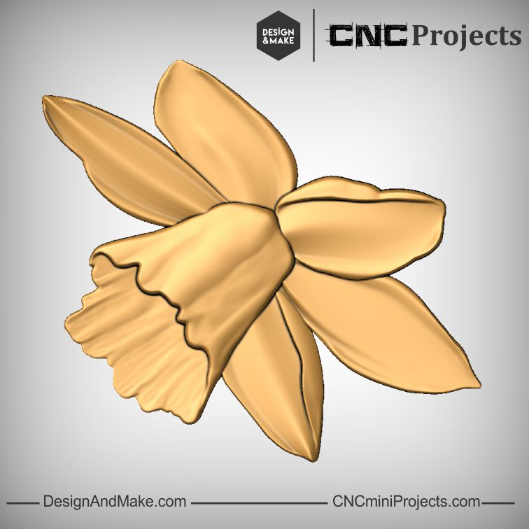 Daffodil No.1.jpg