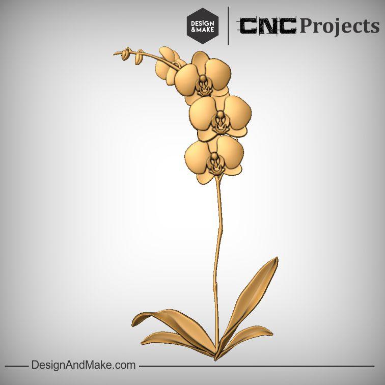 Orchid No.2.jpg