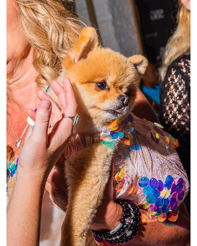 I shot designer Anthony Rubio's Dog Fashion NYFW show for @vogueitalia and had an amazing time hanging out with the best dressed dogs in NYC.  Thank you @alessiaglaviano for featuring this series, I'm so grateful 😊 check out the full series online, link is in my bio