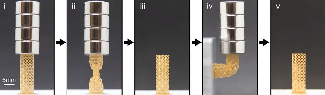 The metamaterial holding a load, being reshaped, and reverting to its original form [Image: Rutgers University–New Brunswick]