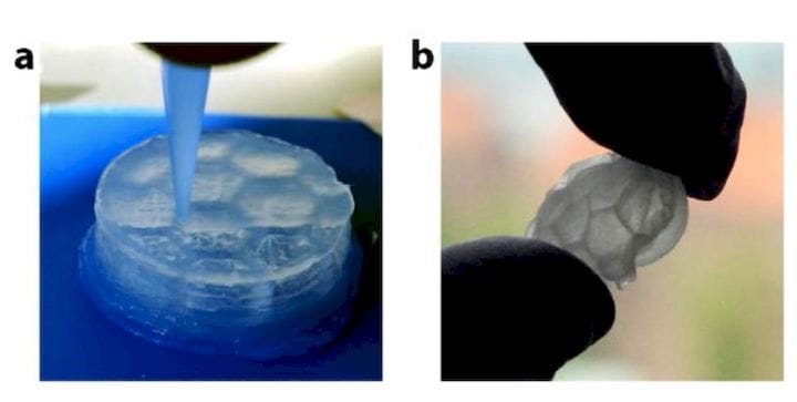 A 3D print using aligned cellulose nanofiber hydrogels [Source: Science Direct]