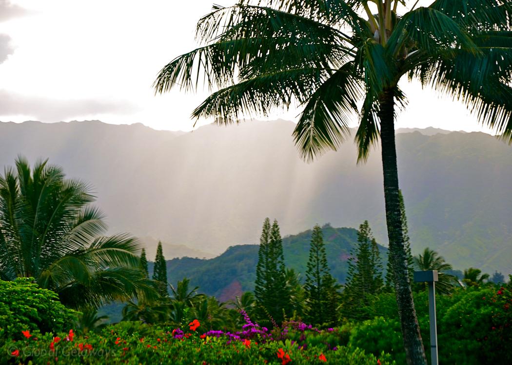 GG Kauai Rain Flower 2011 WM.jpg
