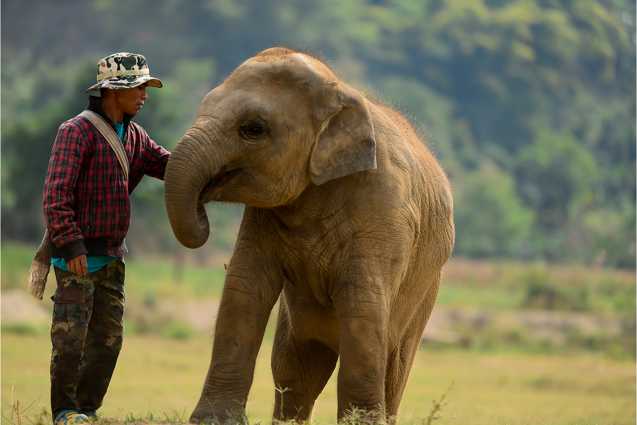 Elephant Mahout who cares for elephants