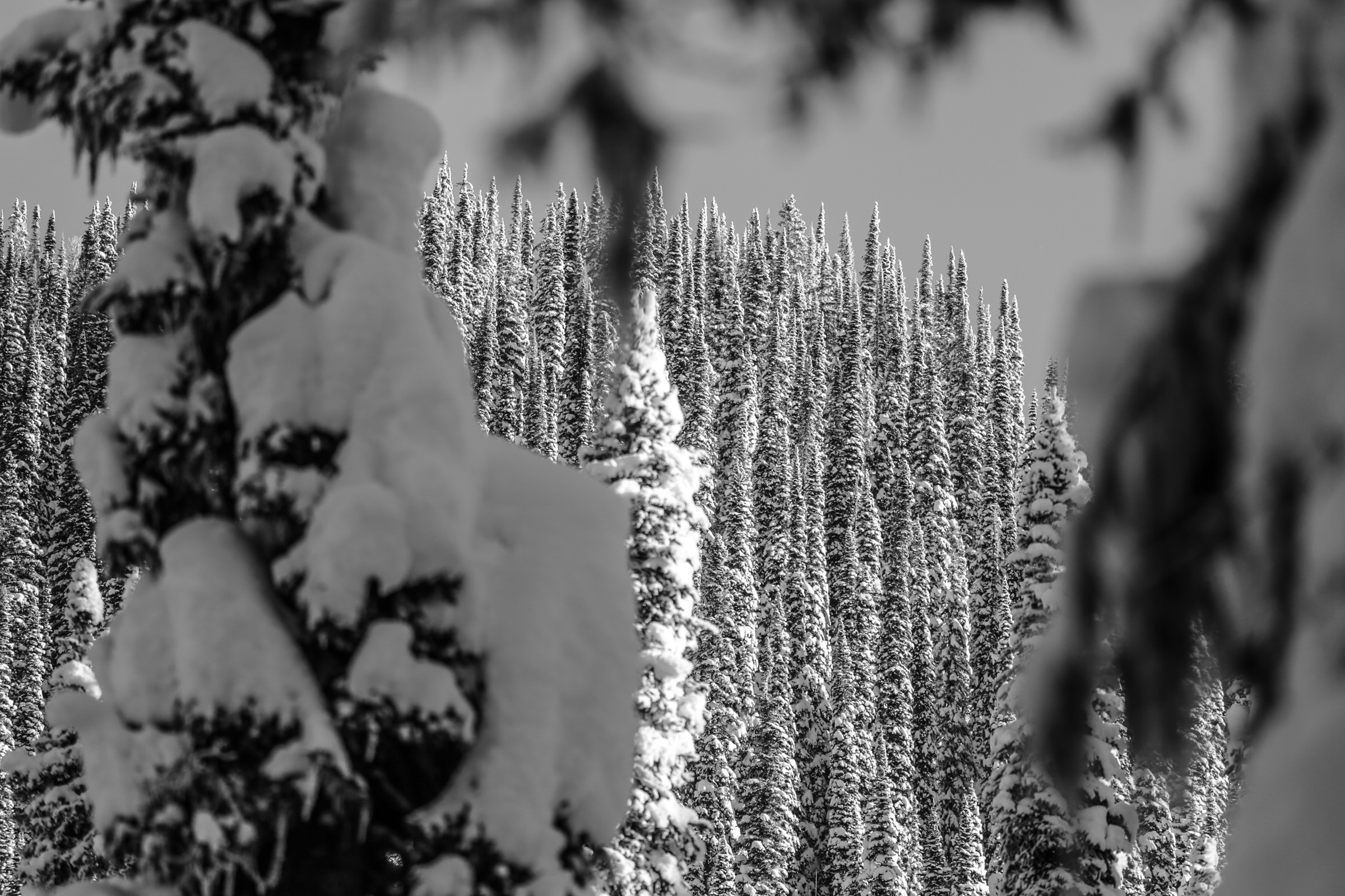 Winter 2017_18 Submissions ILL Web Resolution-5.jpg