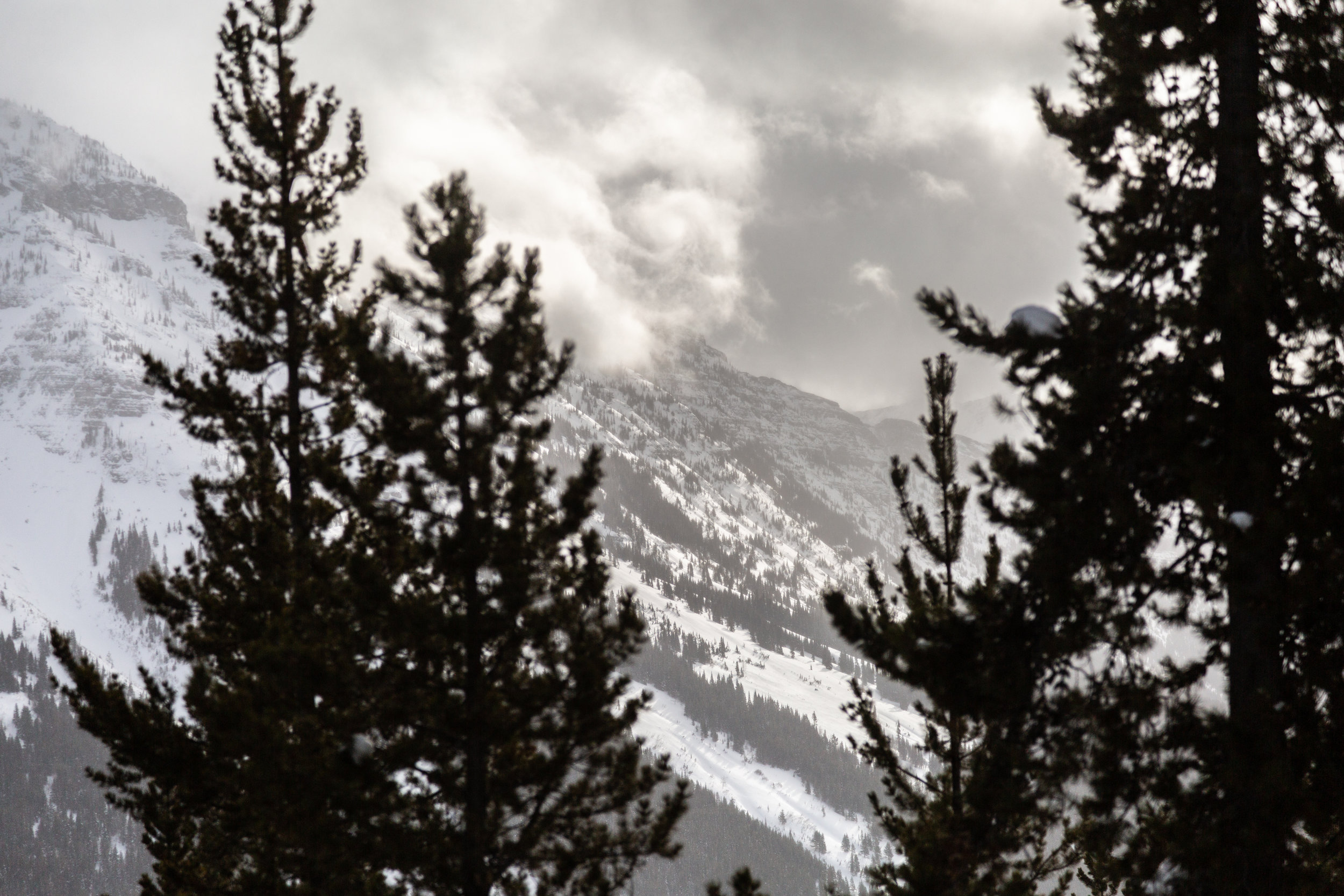 Snowseekers Castle Mtn. 2019-28.jpg