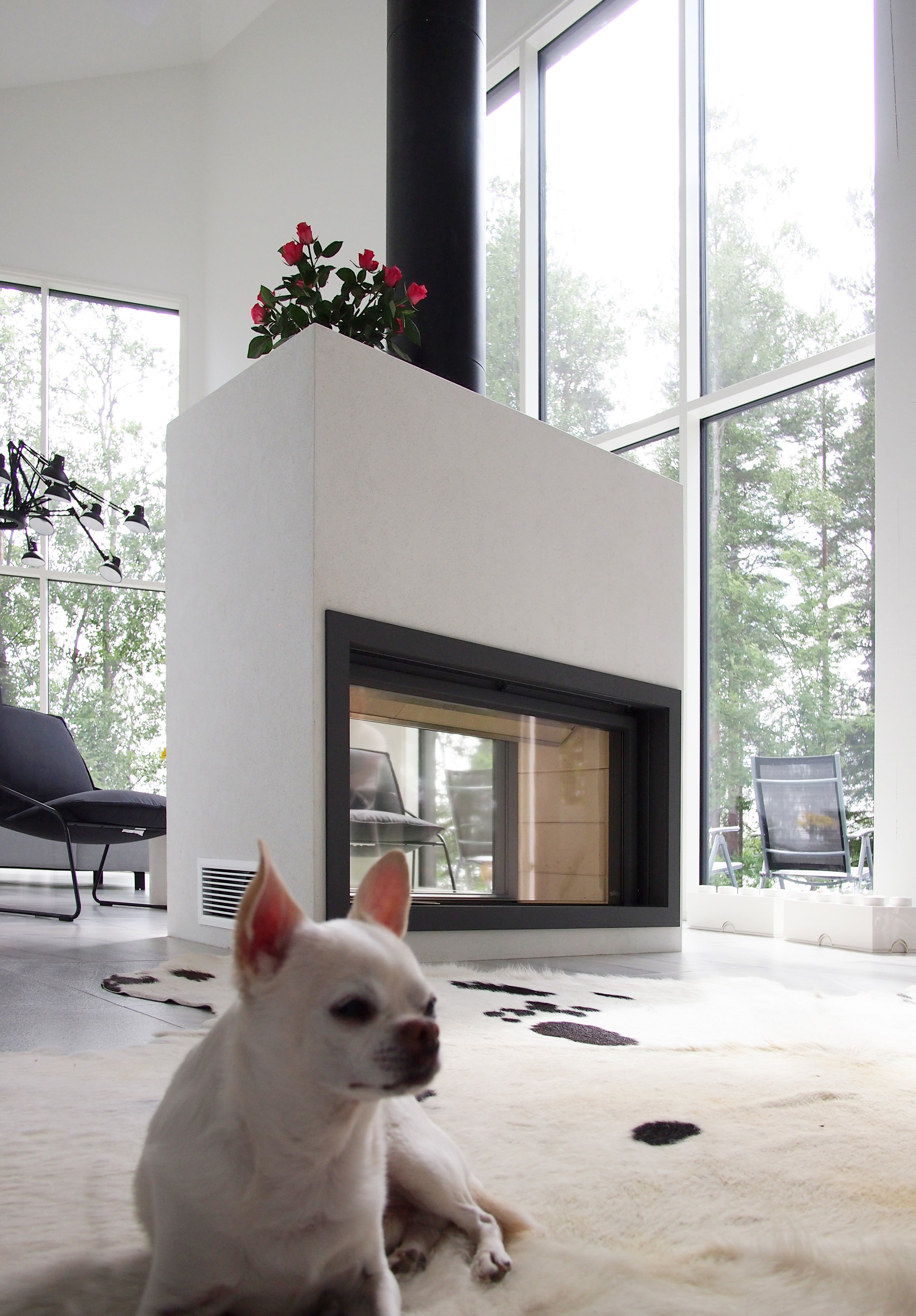 Takka+koira.jpg
