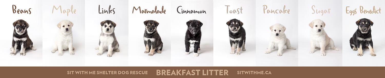 The Breakfast Litter