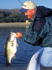 Photo: Bill Siemantel  Bill Siemantel and Mike Jones say big bass aren't loners – anglers just think they are.