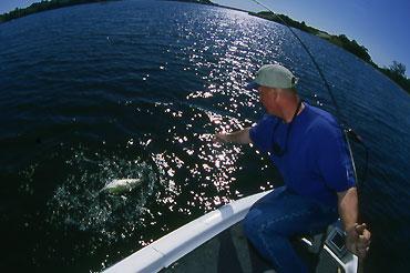 Photo: Bill Siemantel  Big bass don't need deep-water escape routes, they need deep-water ambush areas.