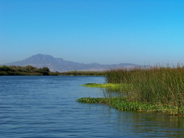 Mount Diablo as seen from the Delta in Sand Mound Slough.