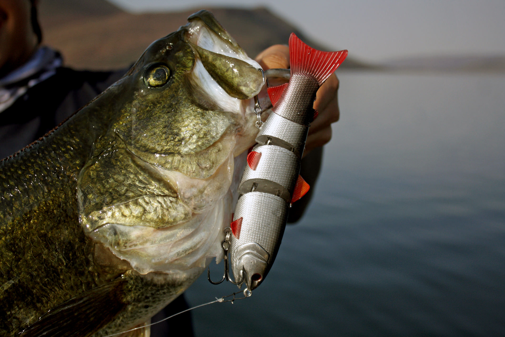 I fish the BBZ1 with 20lb fluorocarbon line. For big baits with large hooks, some line stretch is actually a good thing.