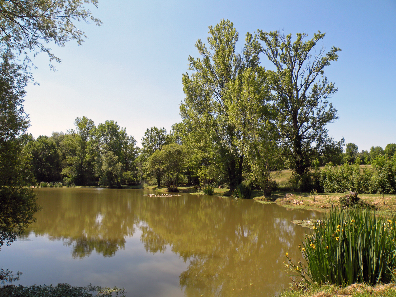 Pic. 1. How's this for a semi-private pond somewhere in South-western France?