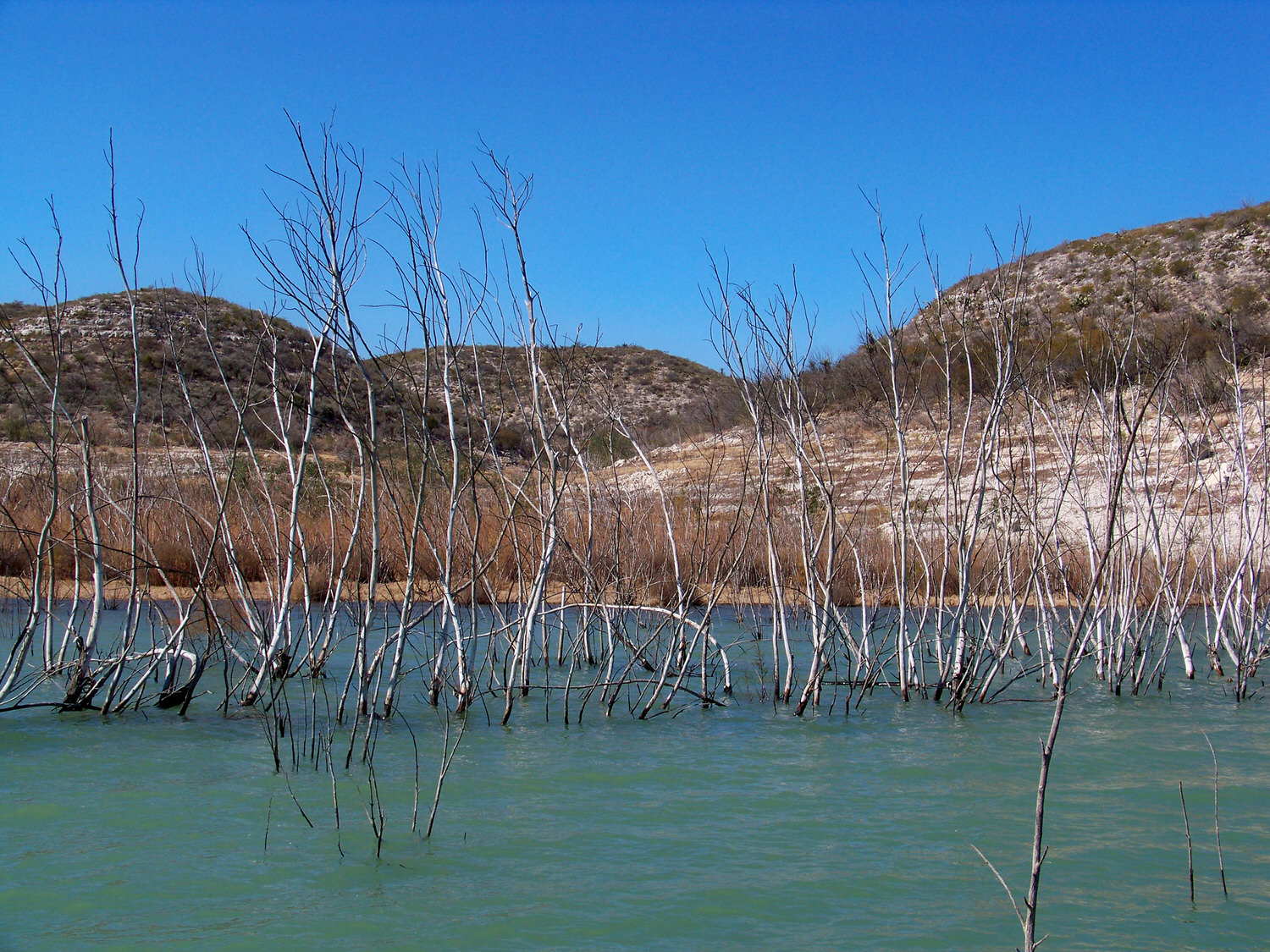 Flooded trees Canyon Del Tule Mexico