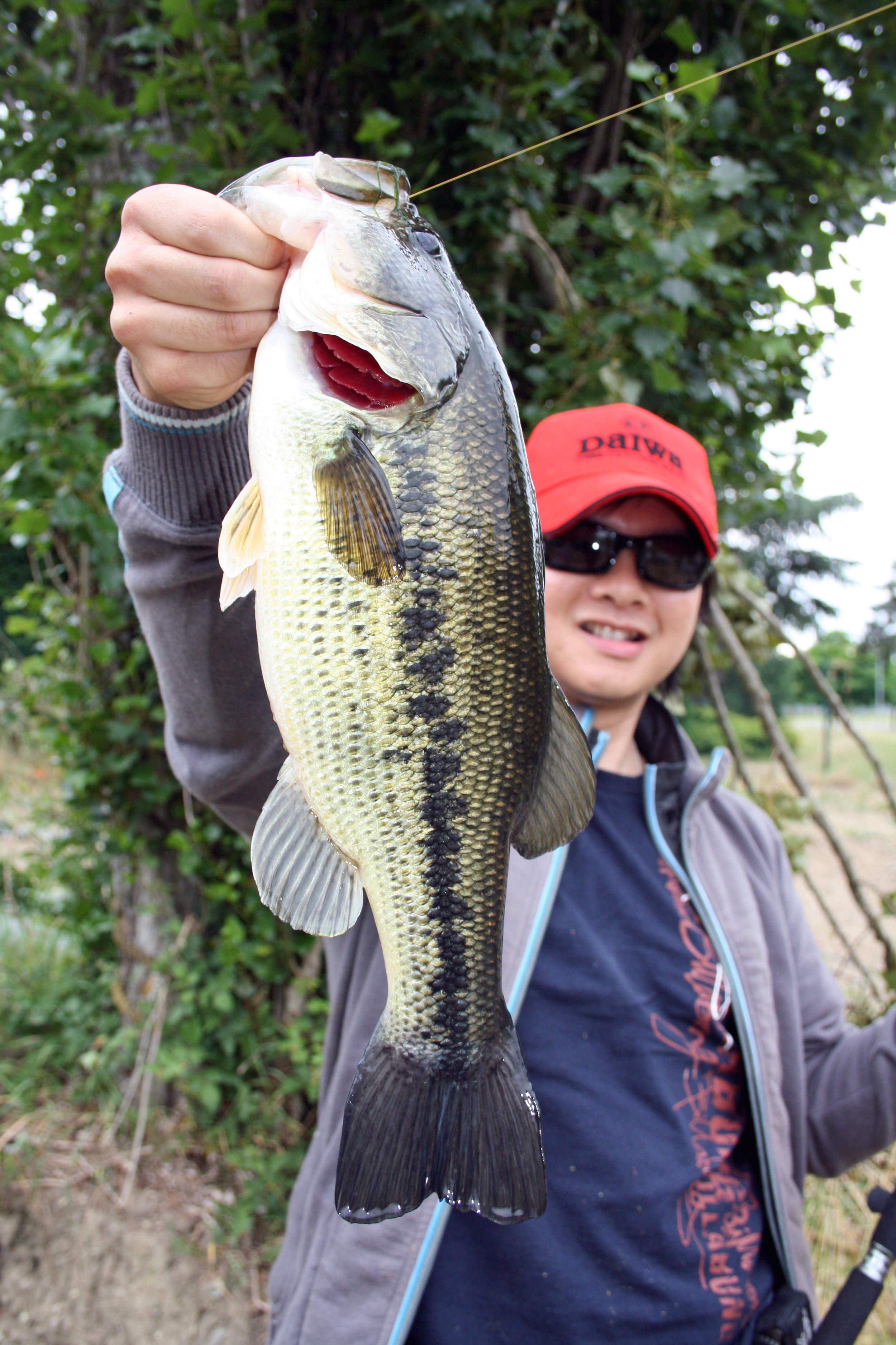 Pic. 4.  Another solid fish! I caught this fish on a wacky rigged 4-inch Senko on 6lb test Sufix Siege monofilament in clear water.