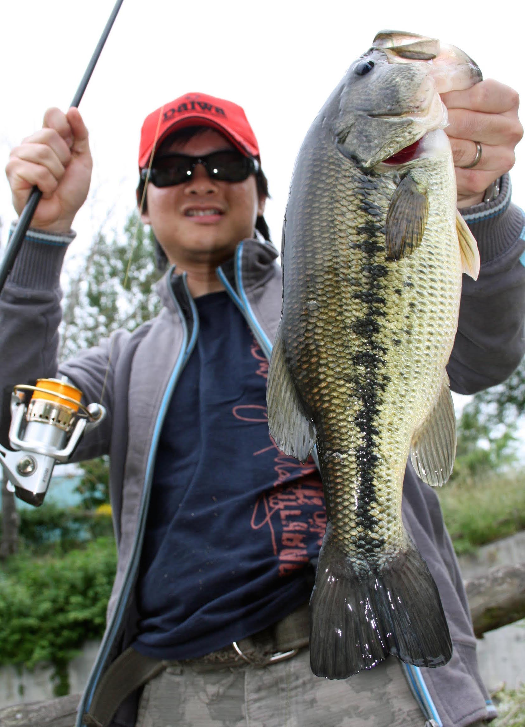 Pic. 2. A 3lb'er on live perch. I caught this fish on finesse live bait rig in the clearest part of the muddy pond.