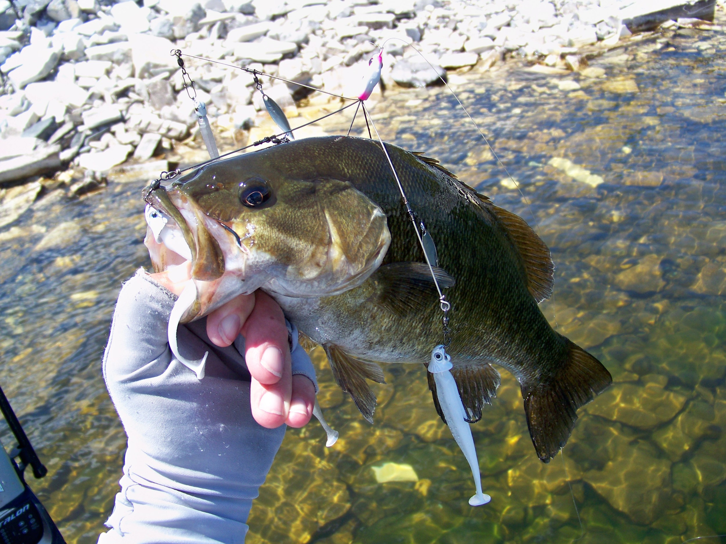 The Umbrella Rig produced the majority of our fish that were primarily smallmouth bass.