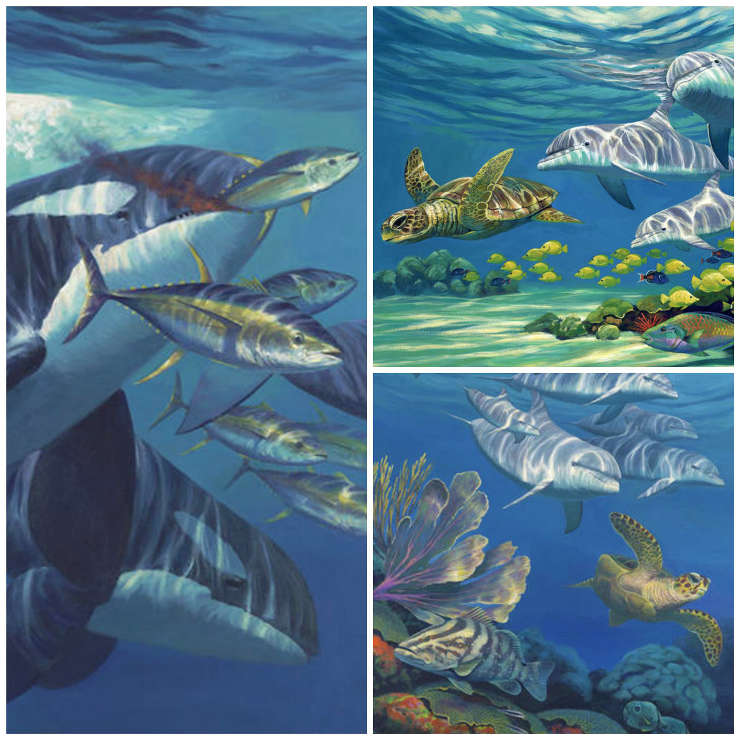 "Left to right clockwise; ""The Corner"" – Orca feeding on Yellowfin Tuna north of Little Bahama Bank, ""Reef Flat"" – Bottlenose Dolphin and Loggerhead Turtle Hawaii, ""Hawksbill Garden"" – Spotted Dolphin and Hawksbill Turtle Bahamas"