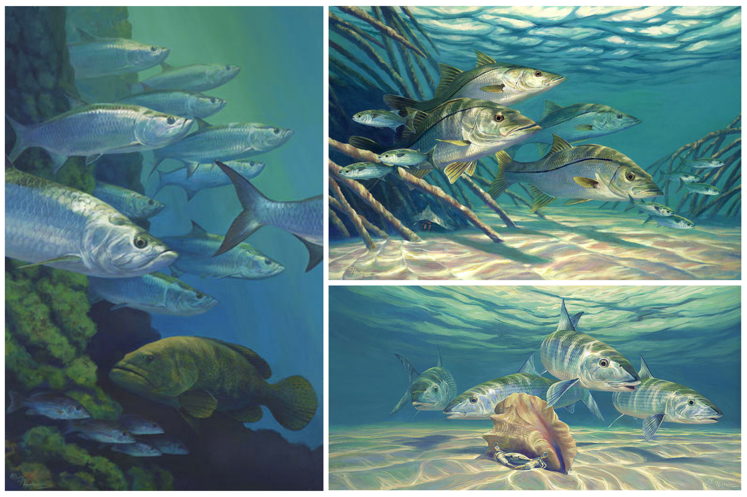 "Left to right clockwise; ""Under Seven Mile Bridge"" – Tarpon and Goliath Grouper, ""Hanging Out"" – Snook in Mangroves, ""The Invaders"" – Bonefish on the Flats"